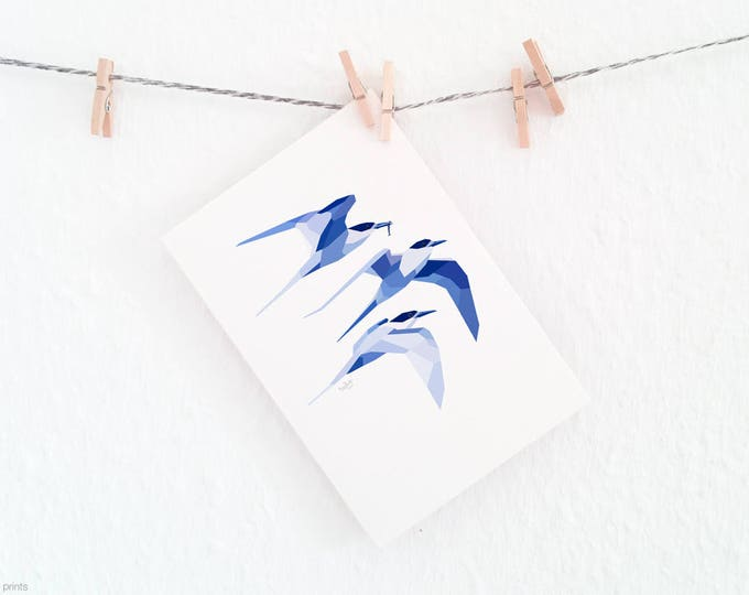 White-fronted tern, New Zealand sea birds, Sea themed print, Ocean birds print, New Zealand birds, New Zealand print, Flying birds art print