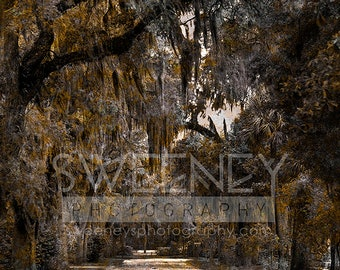 Moss Covered Savannah trees photograph