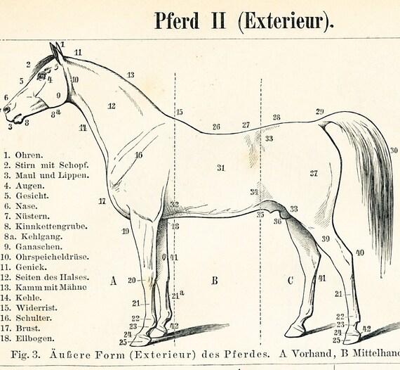Horse anatomy print horse skeleton print horse muscle system | Etsy