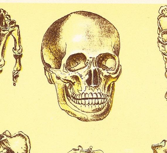Menschliche Skelett medizinischen Diagramm 1916 Illustration | Etsy