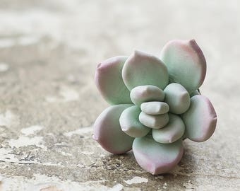 Succulent pin - succulent brooch - plant jewelry - succulent jewelry - brooch for coat - botanical brooch - nature inspired jewelry