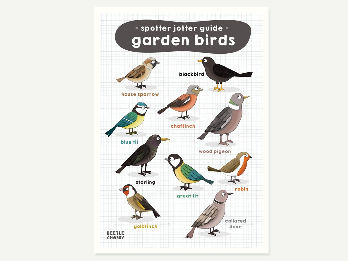 It is a picture of Agile Printable Birding Checklist
