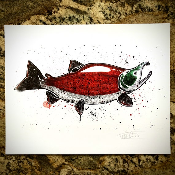 Spawning Sockeye Art Print - 11x14