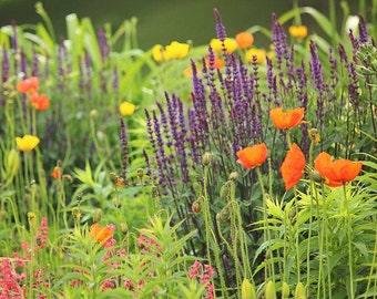 Garden Photography - purple orange and yellow flowers, nature photography, 8x10 fine art photography