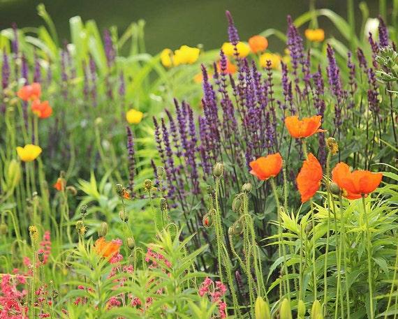 Garden photography purple orange and yellow flowers nature etsy image 0 mightylinksfo