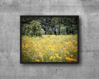 Yellow Field of Flowers - Flower - Yellow - Field - Green - photography art print