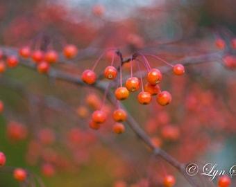 Red Berries - Nature photography, Art, landscape, home decor, fall, autumn, fine art print, Christmas, wall art, photography