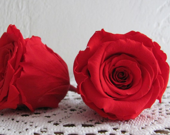 Preserved Roses, Orange Red Rose Heads, Preserved Rose Heads, Wedding Flowers, Corsage Flowers, Boutonniere Flowers, Bridal Roses