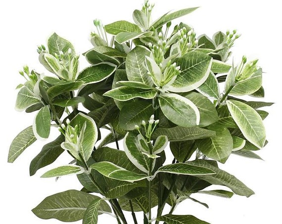 Artificial Plant, Wedding Plants, Wedding Greens, Bouquet Filler, Floral Arrangement Plants, Pittisporum Bush, Variegated Plant