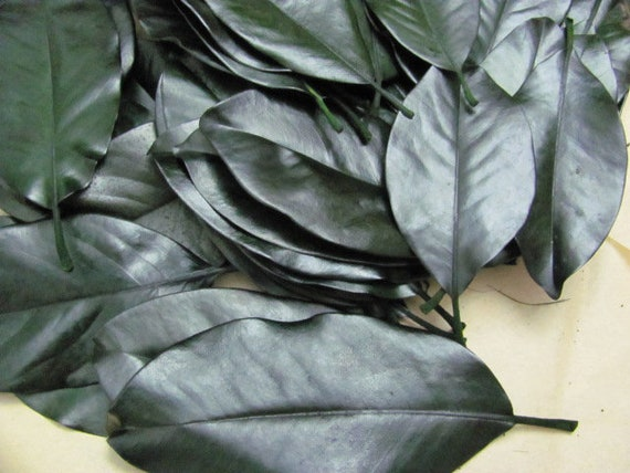 50 Magnolia Leaves Preserved, Medium to Large Magnolia Leaves for Wedding Place Cards, Party Decorations and Craft Projects