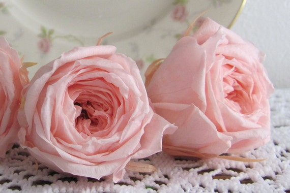 2-Preserved Rose Heads, Bridal Pink Roses, Preserved Roses, Wedding Flowers, Bridal Flowers, Preserved Flowers