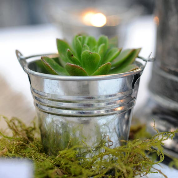 12 Mini Party Favor Pails Ideal for Succulents