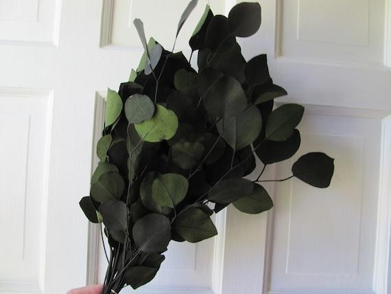 Preserved Eucalyptus, Green Silver Dollar Eucalyptus, 1 Bunch Preserved Green Eucalyptus, Wedding Eucalyptus Floral Supplies