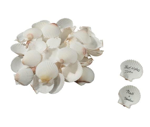 Craft Shells, Wedding Guest Signing Shells, Sea Shells, Beach Wedding Shells, Nautical Wedding Decorations, Wedding Supplies