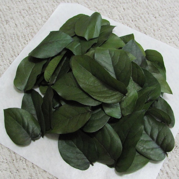 50 DIY Place Card Leaves, Preserved Lemon Leaf Ideal for Place Cards, Gift Tags and Wedding Floral Craft Projects