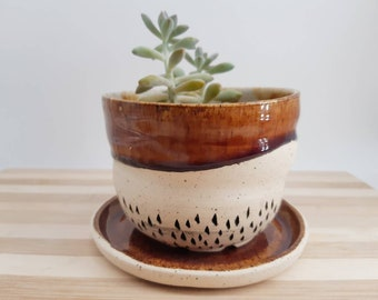 Planter and catch plate