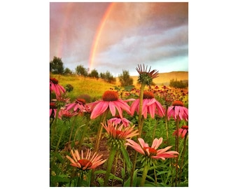 Rainbow Photo, Garden Art, Echinacea, Coneflowers, Sunset, Nature Photography, Double Rainbow