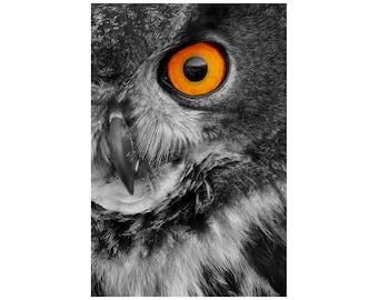 Eagle Owl Photo, Wildlife Photography, Bird Photo, Nature Photography, Black and White, Halloween