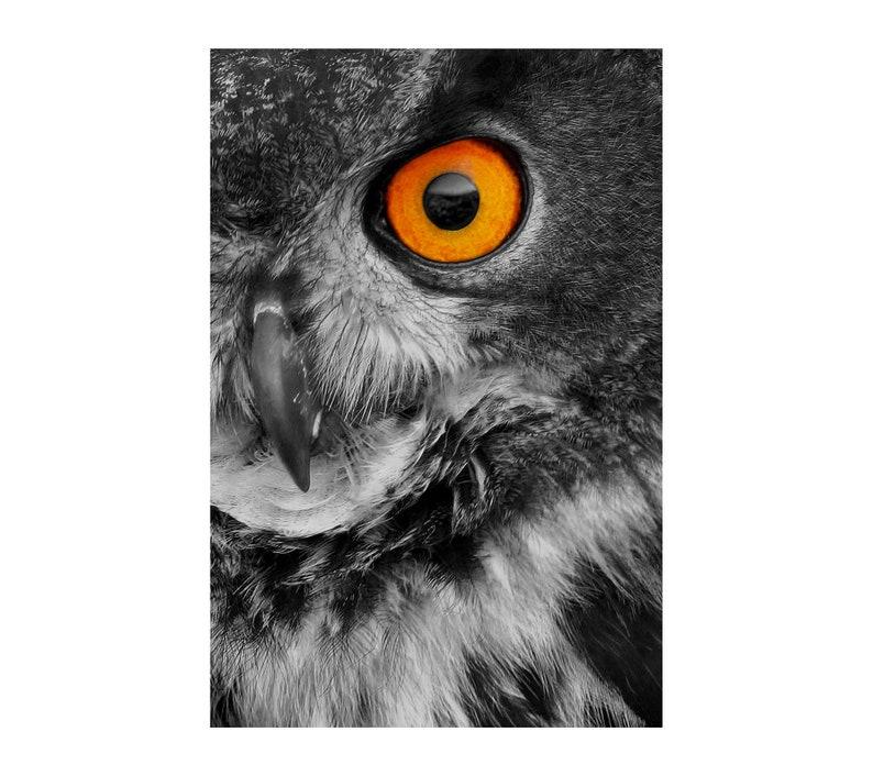 Eagle Owl Photo Wildlife Photography Bird Photo Nature image 0