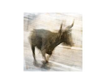 Black Bull Photo, South of France, Camargue Bull, Animal Photography, Cowboy, Provence, France