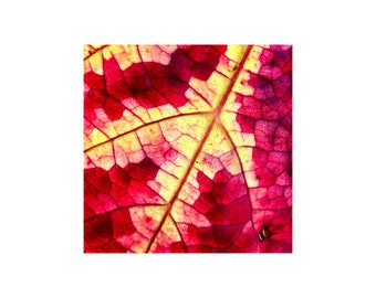 Grape Leaf Photo, Autumn Colors, Pixelated Pattern, Harvest, Macro Photography, Wine Red