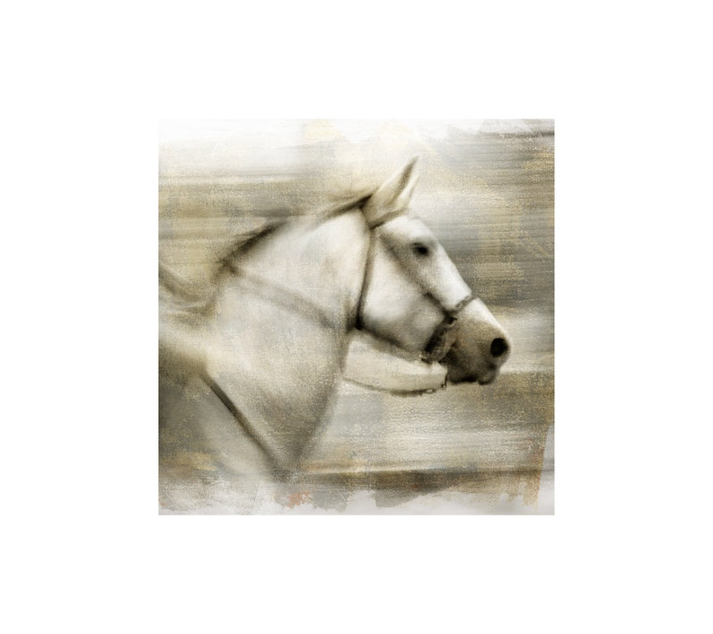 White Horse Photo Horse Art Animal Photography Cowboy image 0