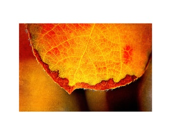 Honey Gold Leaf Photo, Macro Photography, Fall Home Decor, Rust Red, Autumn Colors