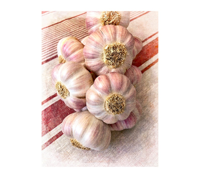 Pink Garlic Photo Kitchen Art French Market Photo Local image 0