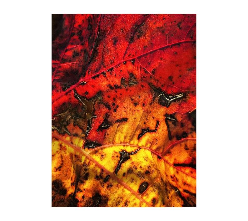 Autumn Leaf Photo Fire Photograph French Vineyard Autumn image 0