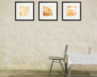 White Rose Photo Set, Wedding Decor, Romantic Wall Art, Floral Photography, Warm Pastels