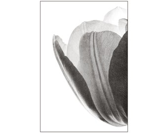 Rich Gray Tones, Tulip Photograph, Macro Photography, Black and White, Home Decor, Flower Photography