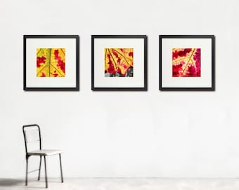 Grape Leaves Photo Set, Autumn Colors, Macro Photography, Burgundy, Gold, Green