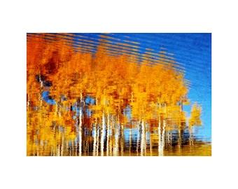 Aspen Trees Photo, Autumn Colors, Quaking Aspen, Honey Gold, Sky Blue, Fall Leaves, Rocky Mountains, Autumn Decor, Nature Photo