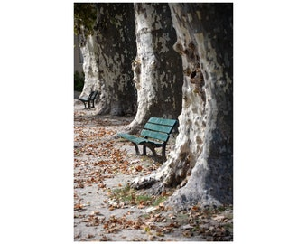 Park Bench Photo, South of France, Trees, Muted Colors, Rustic Scene, Tranquility