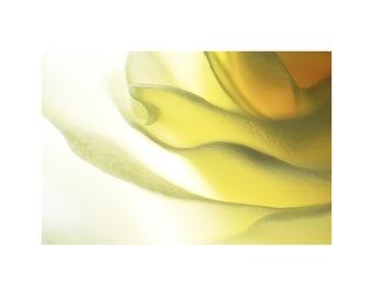 Soft Yellow Rose Photo, Butter Cream, Lemon Yellow, Nature Photography, Home Decor