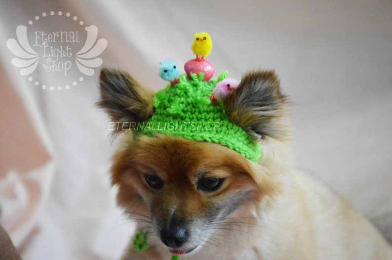 Pet Easter Chicks Beanie XS-XL image 0