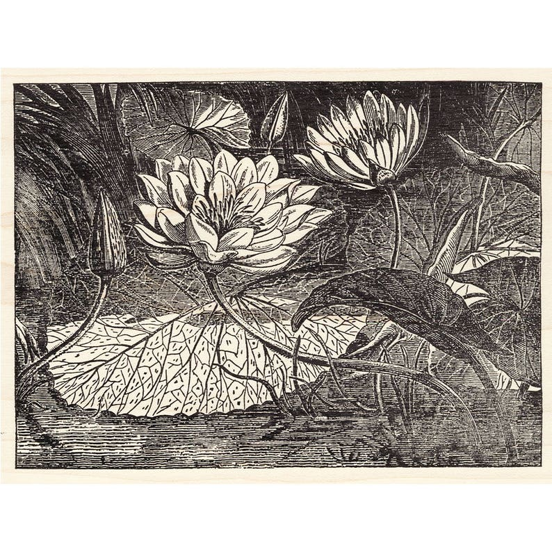 Water Plants Floral Stamps Lily Pad Flower Flowers Unmounted Rubber Stamps