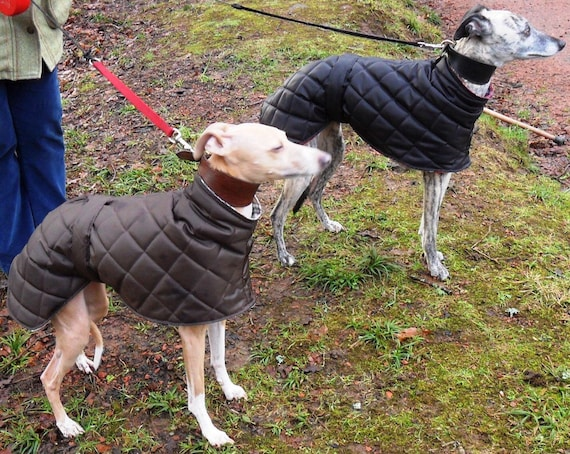 Greyhound and Whippet waterproof fleece lined coats ( ziggy)