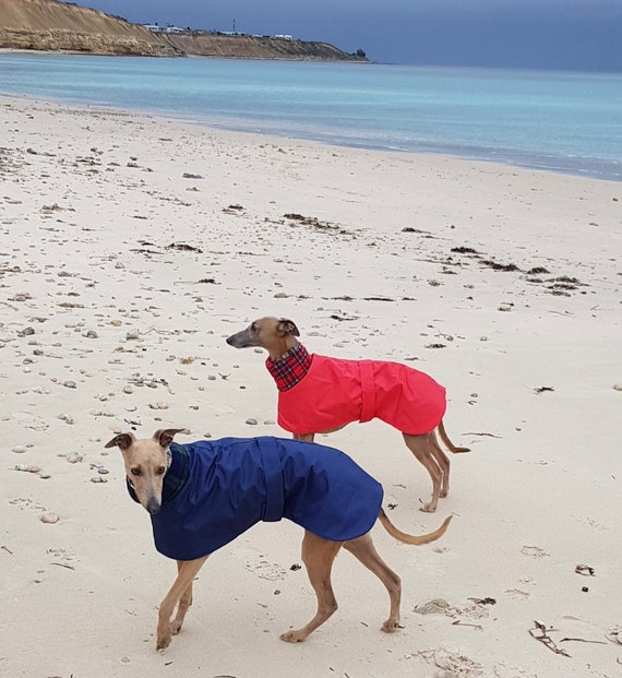 Greyhound Coat, Fleece Lined Coat, Whippet Coat,cótaí fuipéideacha,Waterproof Dog Coat,Whippet Jacket, cotiau milgwn (fleece lined raincoat)