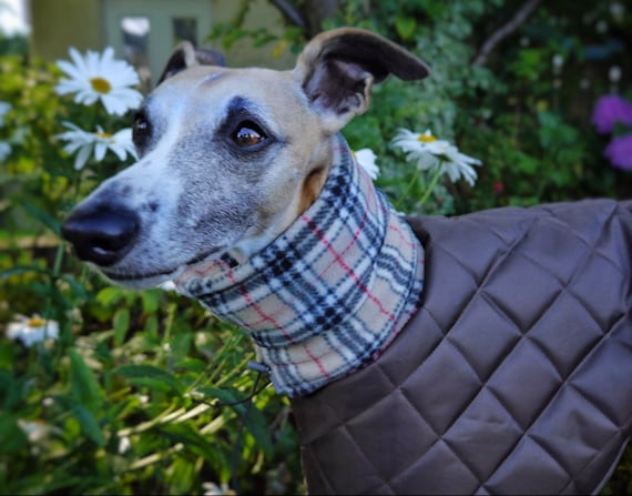 Whippet waterproof coats with a long fleece neck.
