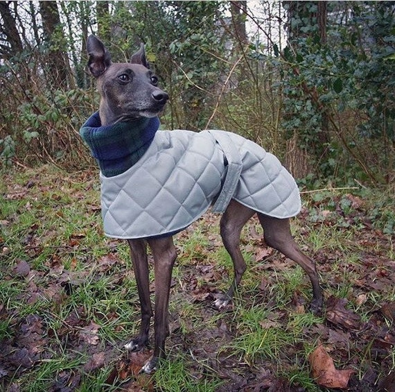 Italian greyhound waterproof winter coats / Cirneco dell'Etna coats