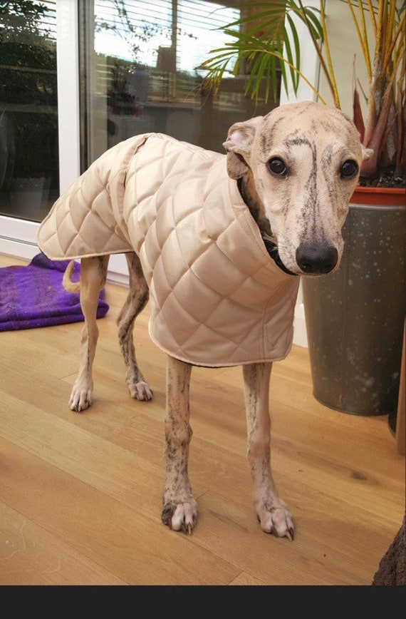 Readymade whippet coat