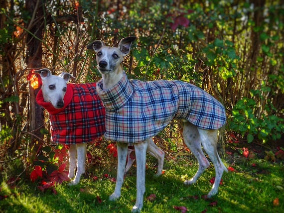 Whippet and greyhound all fleece coats