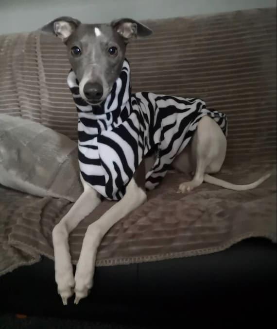 whippet and greyhound fleece jumpers