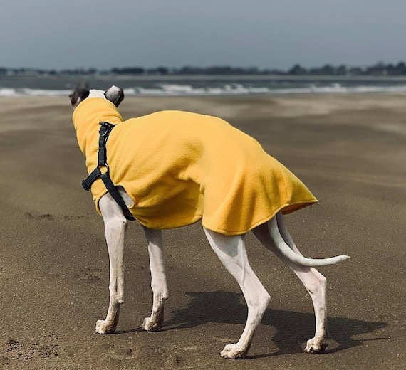 Greyhound and whippet,sighthound fleece jumpers / Sleeveless Sweater/pullover
