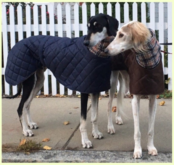 Greyhound ,saluki,lurcher waterproof winter quilted coats with a long fleece neck.