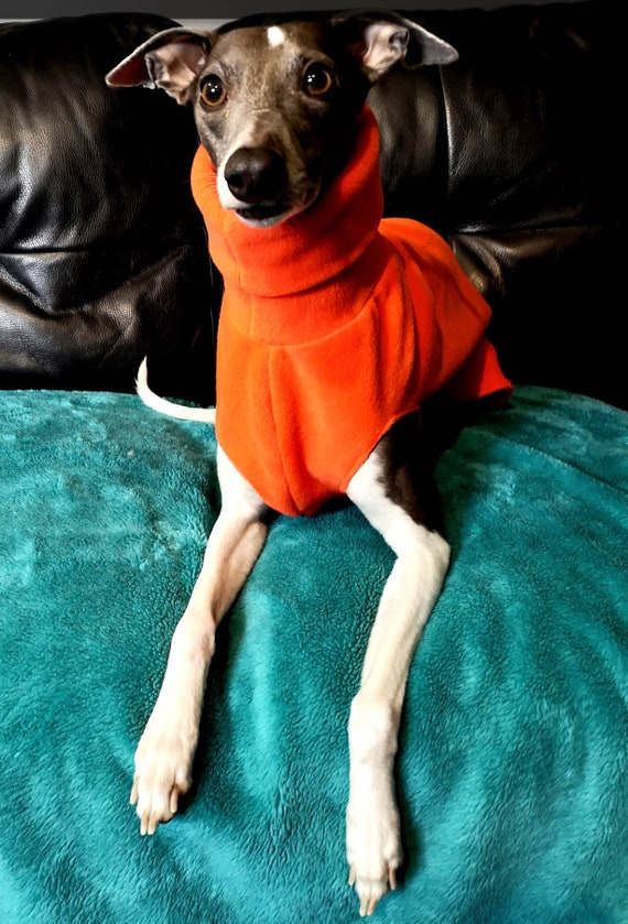 Greyhound and whippet fleece jumpers spring collection