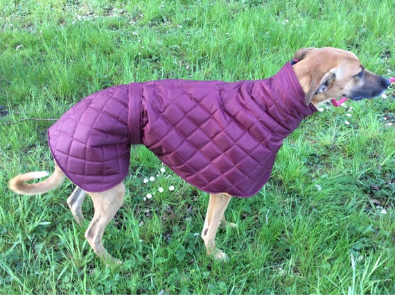 Greyhound and Whippet waterproof fleece lined coats ( quilted ziggy )