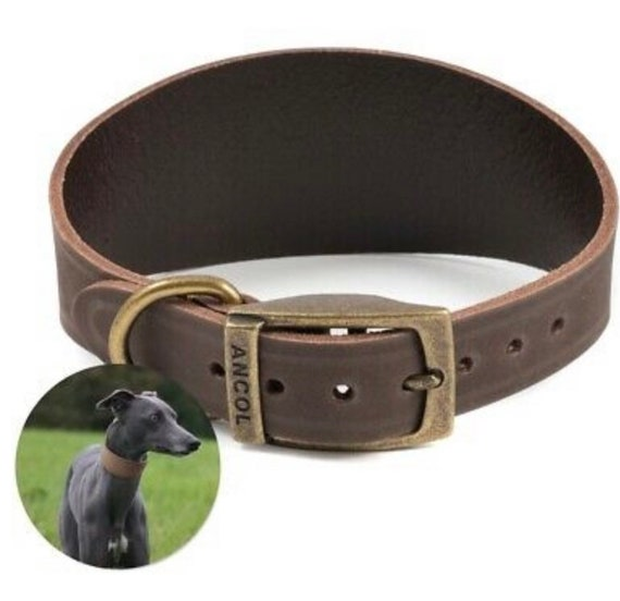 Soft leather whippet and greyhound collars