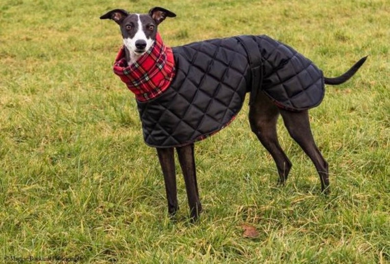 Greyhound salukilurcher waterproof winter quilted coats with image 0
